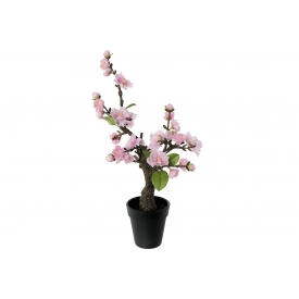 Kirschblütenbonsai im Topf 32cm rosa