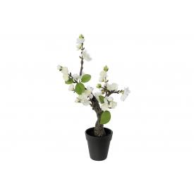 Kirschblütenbonsai im Topf 32cm weiß