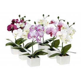 Orchidee in Keramiktopf 18cm sortiert