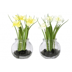 Narzissen mit Gras im Glas sortiert 15cm