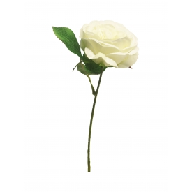 Englische Rose 28cm creme