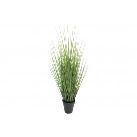 Gras im Topf 61cm